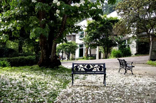 住宿區旁的油桐樹落滿一地白色的花,讓人視覺一亮