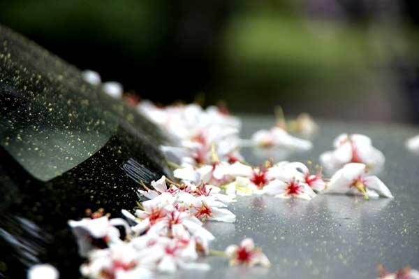 http://www.ioneone.com/Boffice/upload/files/2011_823801_flower_2.jpg