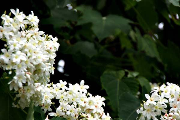 http://www.ioneone.com/Boffice/upload/files/2011_823801_flower_3.jpg