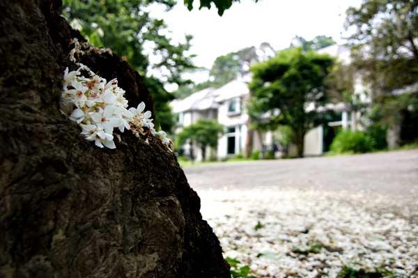 http://www.ioneone.com/Boffice/upload/files/2011_823801_flower_7.jpg