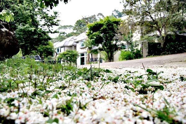 http://www.ioneone.com/Boffice/upload/files/2011_823801_flower_8.jpg