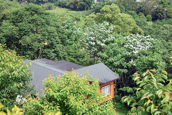 長尾山娘民宿開幕,螢火蟲油桐花歡喜來報到歡迎來電預約!
